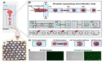 고려대 정아람 교수팀, T세포 유전자 편집, 조작 가능한 바이오칩 개발